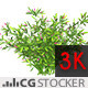 Wind Simulated Plant with Pink Flowers - VideoHive Item for Sale