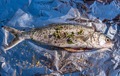 Fresh Salt Water Fish - PhotoDune Item for Sale