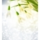 Background with Snowdrops - GraphicRiver Item for Sale