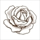 Rose Flower - GraphicRiver Item for Sale
