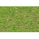 Tileable Newly Planted Grass Texture - GraphicRiver Item for Sale