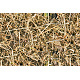 Tileable Forest Ground - Grass Texture - GraphicRiver Item for Sale