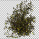 Bush Type 6 - VideoHive Item for Sale