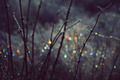 Winter Scene With Spectrum Light Bokeh In Grass - PhotoDune Item for Sale