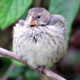 Sleeping Darwin's Finch - VideoHive Item for Sale