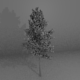 High-Poly Generic Tree - 3DOcean Item for Sale