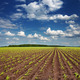 Field with sprouting crops - PhotoDune Item for Sale