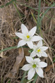 Beautiful and small mountain flower in white - PhotoDune Item for Sale