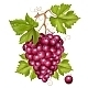 Grape Cluster with Green Leaves - GraphicRiver Item for Sale