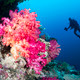 Coral reef and diver - PhotoDune Item for Sale