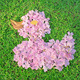 Flower arrangements in the shape of Duck - PhotoDune Item for Sale