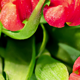 Bouquet of Bright Tulips Blooms 05 - VideoHive Item for Sale