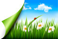 Spring background with flowers, grass and a butterfly.  - PhotoDune Item for Sale