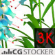 Blue Flower Plant - VideoHive Item for Sale
