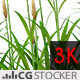 Grass Brown Flowers - VideoHive Item for Sale