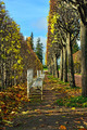 The alley with benches in Catherine park in Pushkin, Russia - PhotoDune Item for Sale