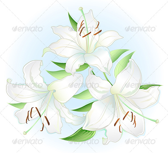 GraphicRiver White Lilly 7201778