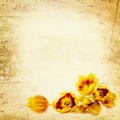 Grunge Tulips Background - PhotoDune Item for Sale