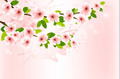 Spring background with blossoming sakura branches. . - PhotoDune Item for Sale