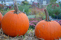Two farm pumpkins - PhotoDune Item for Sale