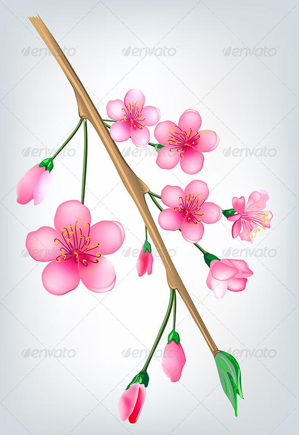 GraphicRiver Sakura Blossom Branch 7216791