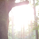 Sunshine in Forest - VideoHive Item for Sale
