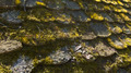 Moss on an old roof tiles - PhotoDune Item for Sale