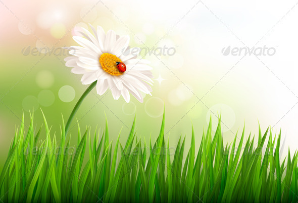GraphicRiver Spring Background with a Daisy and a Ladybug 7224258