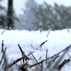 Snowing Ground - Grass In Winter Forest - VideoHive Item for Sale
