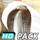 Serpent Charmer & Snake Dancing (5-Pack) - VideoHive Item for Sale