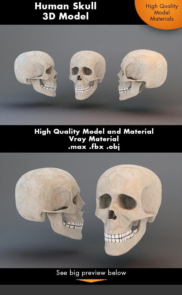 3DOcean Human Skull 3D Model 7231272