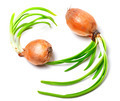 Two spring onions (Allium cepa) - PhotoDune Item for Sale