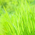 Fresh green grass background - PhotoDune Item for Sale