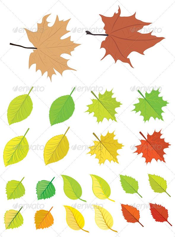 GraphicRiver Colorful Autumn Leaves 7244580