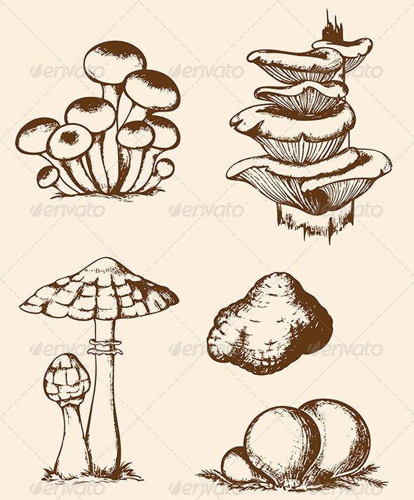GraphicRiver Vintage Hand Drawn Forest Mushrooms 7245594