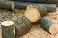 Firewood cutting logs - PhotoDune Item for Sale
