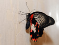 beautiful butterfly - PhotoDune Item for Sale
