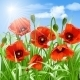 Red Poppies in Grass - GraphicRiver Item for Sale
