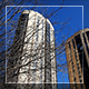 Tree And City Buildings - VideoHive Item for Sale