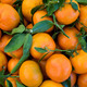 Bunch of fresh clementines - PhotoDune Item for Sale