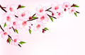 Spring background of a blossoming tree branch with spring flowers. - PhotoDune Item for Sale