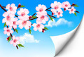 Spring background of a blossoming tree branch with spring flowers - PhotoDune Item for Sale