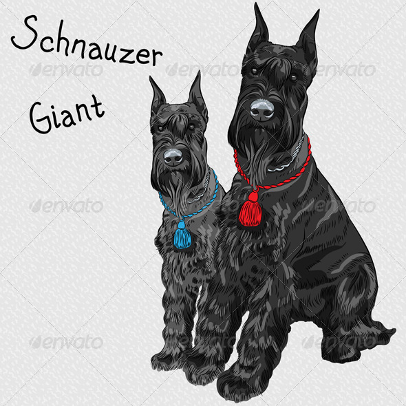 GraphicRiver Black Giant Schnauzer Dog Sitting 7285253