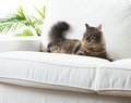 Beautiful cat at home - PhotoDune Item for Sale