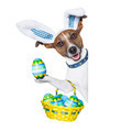 dog easter bunny - PhotoDune Item for Sale