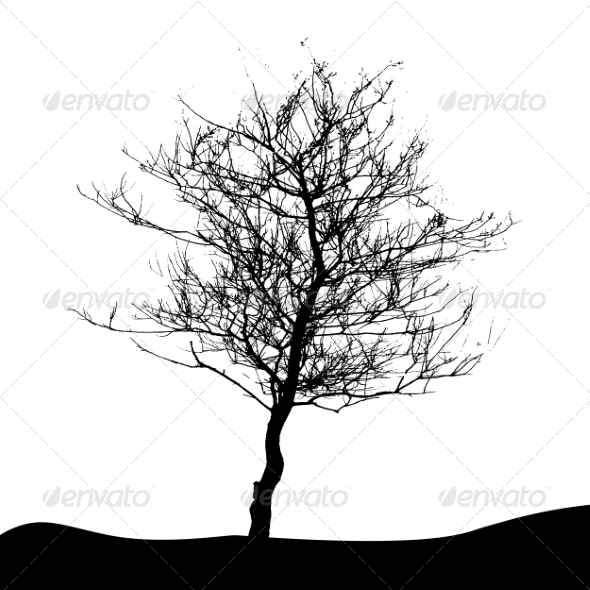 GraphicRiver Tree Silhouette Isolated on White Background 7299950