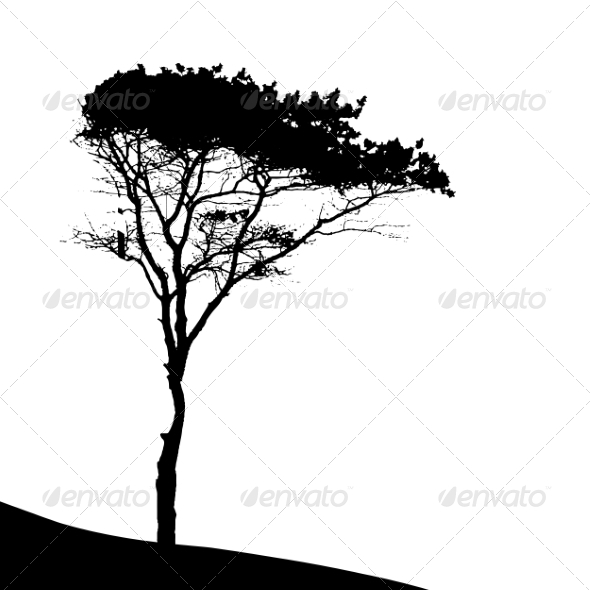 GraphicRiver Tree Silhouette Isolated on White Backgorund 7299955