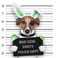 easter mugshot dog - PhotoDune Item for Sale