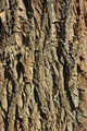 Bark detail of old tree - PhotoDune Item for Sale