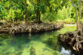 Mangrove Forests - PhotoDune Item for Sale